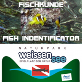 FISH INDENTIFICATOR